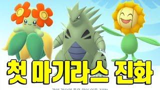 애버라스  - (포켓몬스터) - 포켓몬고 2세대 망나뇽급 마기라스 첫 진화!! 아르코 해루미도 진화 후 비교 포켓몬GO [Pokemon GO] - 기리
