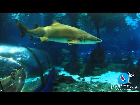 Entradas l aquarium de barcelona for Precio entrada aquarium