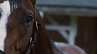 Kentucky Derby 2020 Winner | Authentic