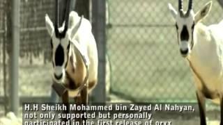 The Return of the Arabian Oryx