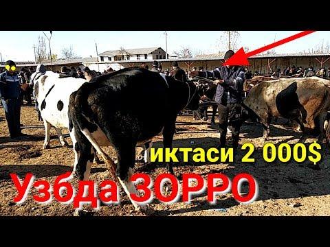 2000$ Эгаси Тергачи Бозори Нархлари онлайн видео