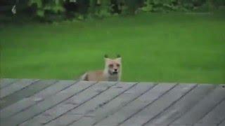 Numb - Linkin Park (dog version)