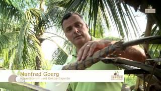 Wie wird Kokosblütenzucker hergestellt?   Dr. Goerg