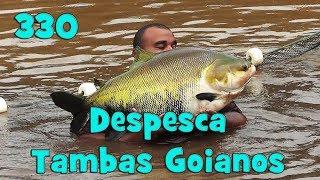 Programa Fishingtur na TV 330 - Despesca e Transporte de Peixes