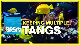FAQ #28: Can I keep multiple tangs in the same aquarium?