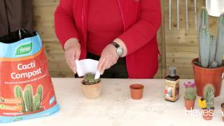 How to look after your cactus | Hayes Garden World