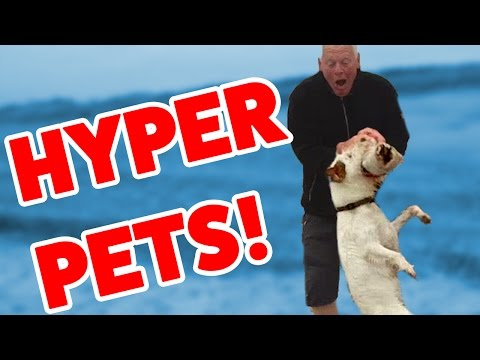Super Hyper Excited Pet & Animal Reaction Videos of 2016 Weekly Compilation   Funny Pet Videos