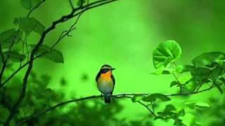 اغاني حصرية عبد الحليم حافظ على التوتة والساقية تحميل MP3