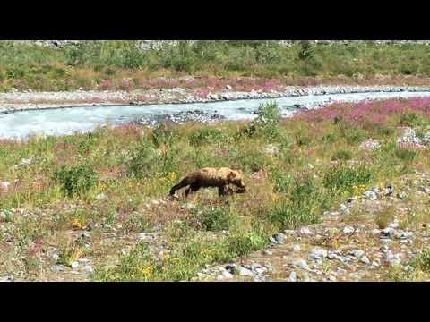 Встреча с медведем 2017
