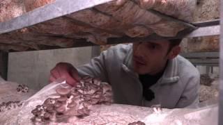 Swiss Military Bunker Revival=Mushrooms!
