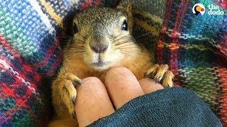 Rescue Squirrel Asks His Parents To Adopt Him - PEANUT | The Dodo