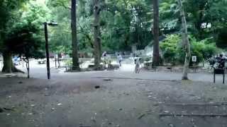 駒場野公園 デイキャンプ場のイメージ