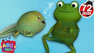 Frog Song | +More Nursery Rhymes & Kids Songs - Cocomelon (ABCkidTV)