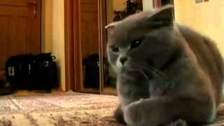 Смотреть онлайн Интересные советы по воспитанию кошек