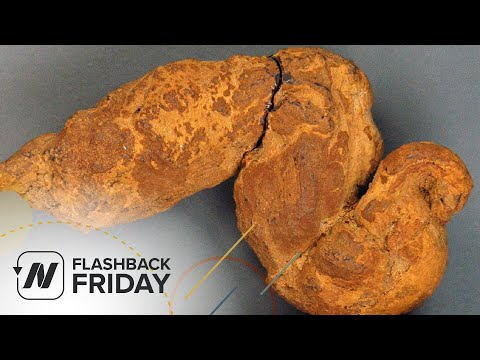Flashback Friday: Paleopoo - What We Can Learn from Fossilized Feces