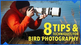 Elevate your bird photography with these 8 tips and techniques