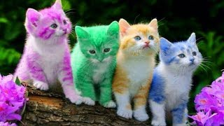 Cute Kitten Cat Colorful Learning Color Video For Kids Finger Family Nursery Rhyme Song - Video Youtube