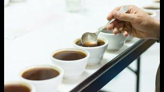 Gavilán Coffee
