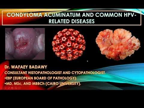 Papilloma vírus egész évben