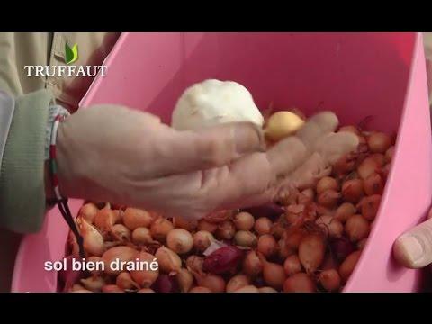 Les pommes de terre dans le diabète