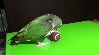 Parrot Playing Football