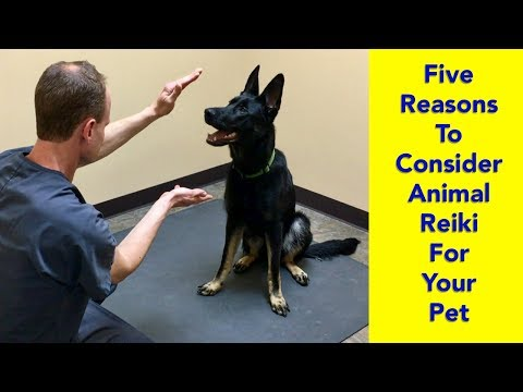 5 Reasons to Consider Animal Reiki for Your Pet - YouTube