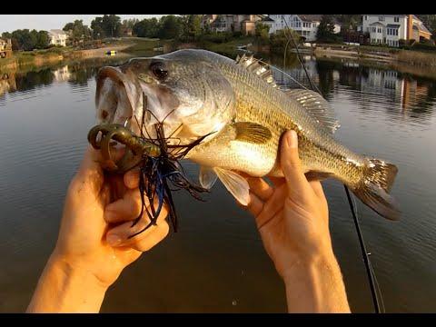 Flippin' jigs and flies for big pond bass