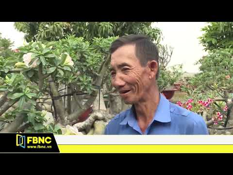 TPHCM : Hoa kiểng tết hút hàng
