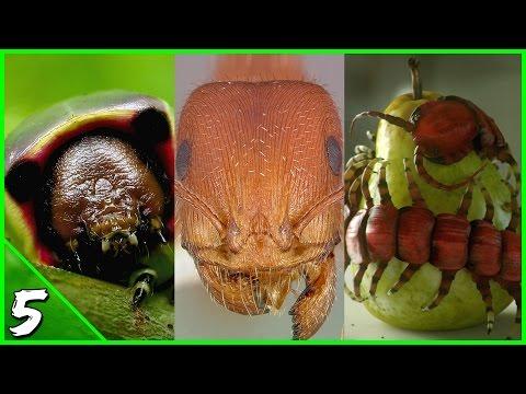 Come togliere prodotti di scarto di vermi