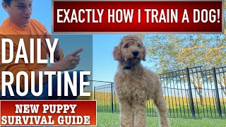 Each day Pet Coaching Routine! NEW PUPPY SURVIVAL GUIDE  (Ep 13)