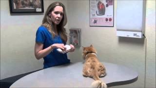 Insulin Basics for your Diabetic Cat