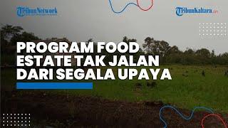 Program Food Estate Tak Berjalan, Sudah Lakukan Berbagai Upaya, Petani Tanjung Buka Beberkan Masalah