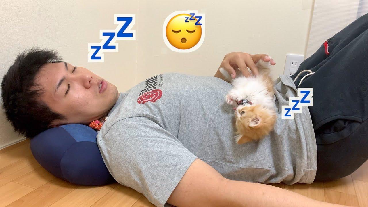 赤ちゃん猫と一緒にお昼寝しようとした結果・・・(マンチカン)/Take a nap with a cat