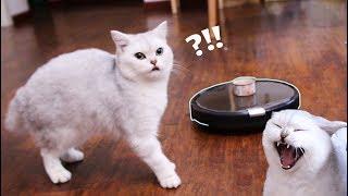 【花花与三猫】当扫地机器人遭遇逗比猫咪,被玩弄沦为逗猫玩具,有钱真的可以为所欲为