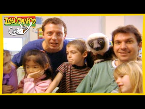 Download Zoboomafoo Cute Animals Full Episode Animal Shows For Video