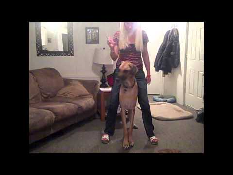 Download Giddy up! HD Mp4 3GP Video and MP3