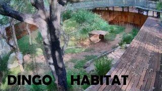 Dingo Habitat