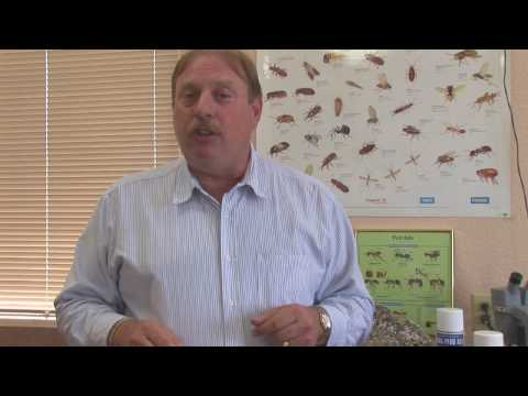 Pest Control Tips : How To Get Rid Of A Flea Infestation Mp3