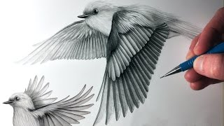 How To Draw Birds Flying