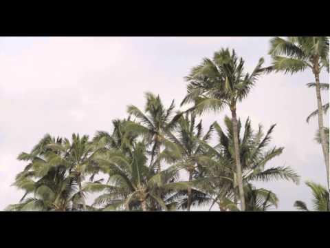 Palmera Express | Trailer 03