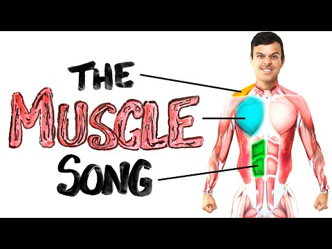 Learn Anatomy with the Muscle Song