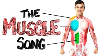 The Muscle Song (Memorize Your Anatomy) | SCIENCE SONGS