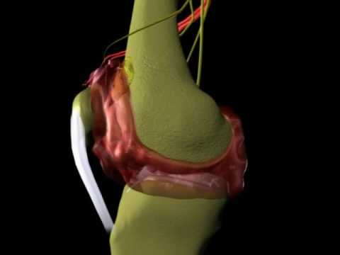 El centro de dolor de la columna vertebral en la región lumbar