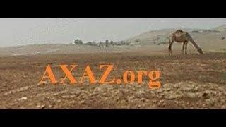 717. Учимся определять корень ивритского слова