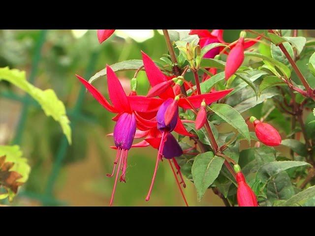 В Ангарске открылась ежегодная выставка цветов