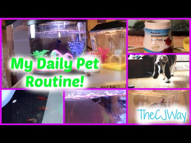 My Daily Pet Care Routine! (Betta Fish)
