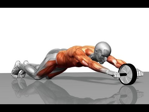 Ab Wheel Rollout Tutorial