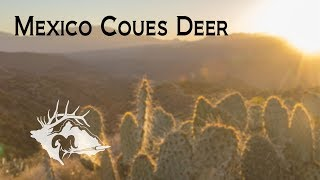 S10 E17 - Mexico Coues Deer