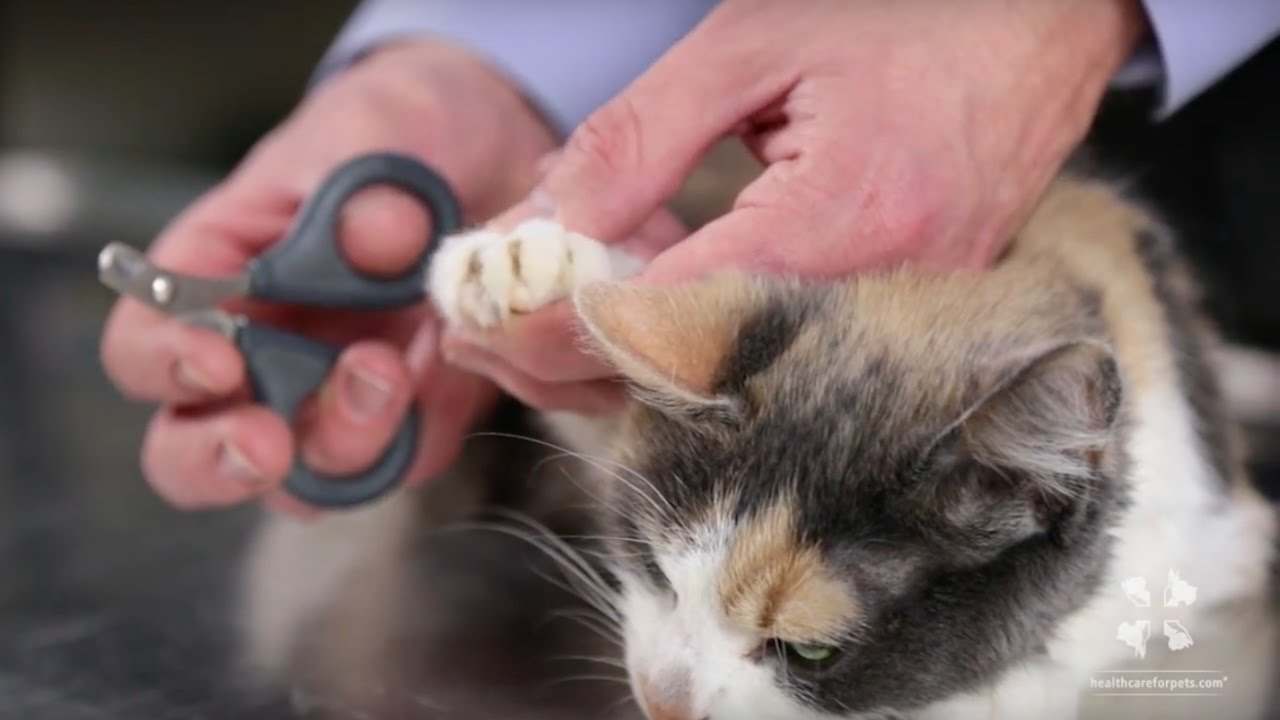 How to Safely Trim a Cat's Nails