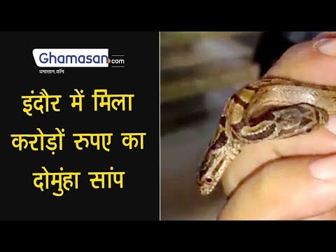 Indore में मिला करोड़ों रुपए का दोमुंहा Red Sand Boa Snake